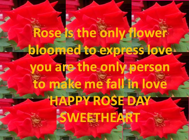 rose day images with love messages