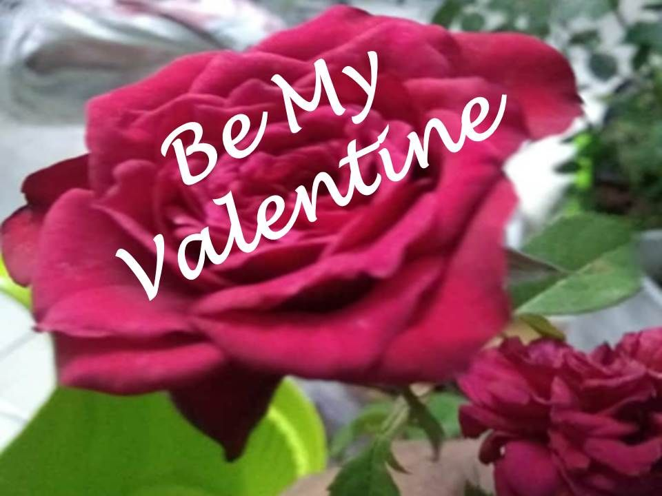 be my valentine quotes images